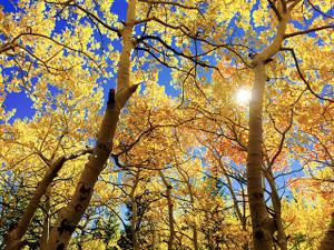 Leaves1363766_640