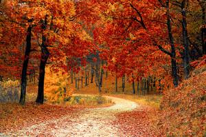 Fall1072821_640